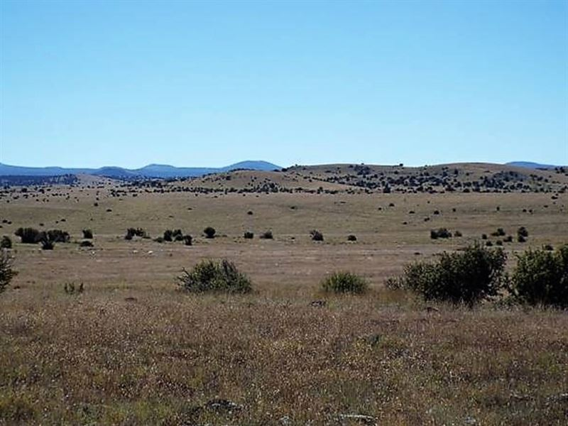 Amazing Acreage Near Show Low : Concho : Apache County : Arizona