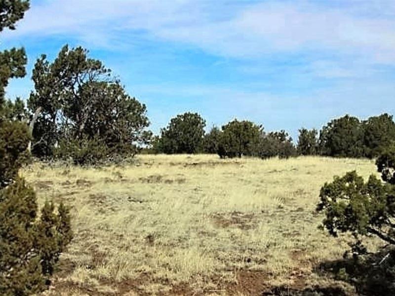 1.13 Acres In Show Low : Show Low : Navajo County : Arizona