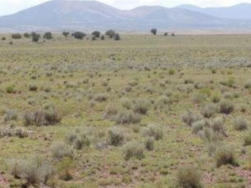 1+ Acres Seller Financing : Concho : Apache County : Arizona