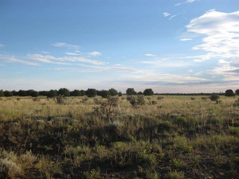 440 Acres In Pinon Canyon Ranches : Thatcher : Las Animas County : Colorado