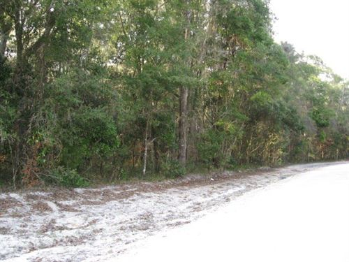 2.02 Wooded Lot 773050 : Old Town : Dixie County : Florida