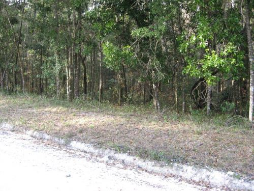 2 Lots - 4.04 Acres 773053 : Old Town : Dixie County : Florida