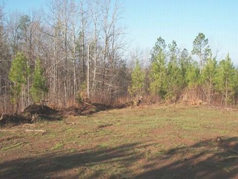 9 Acre Minifarm/Homesite - Lot 15 : Alexander City : Tallapoosa County : Alabama