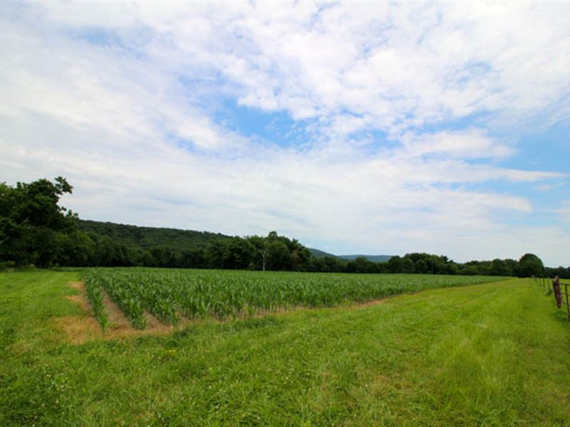 71+/- Acres Land, Building Lot : Millville : Columbia County : Pennsylvania