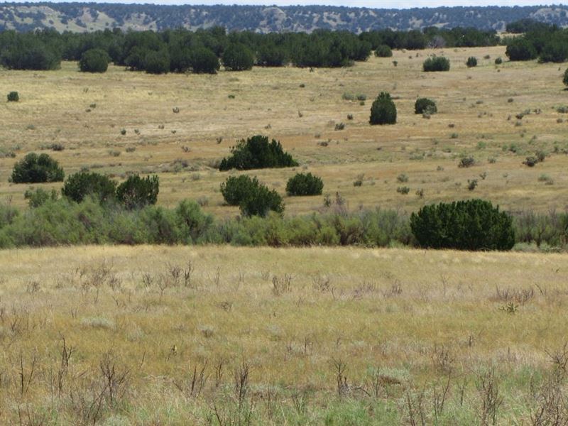 40 Acres Los Animas Ranches : Delhi : Las Animas County : Colorado