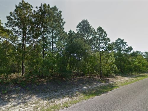 13 Lots Together For Sale : Citrus Springs : Citrus County : Florida