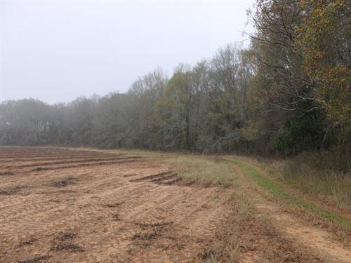 35 Acres Sumter County, Ga : Plains : Sumter County : Georgia