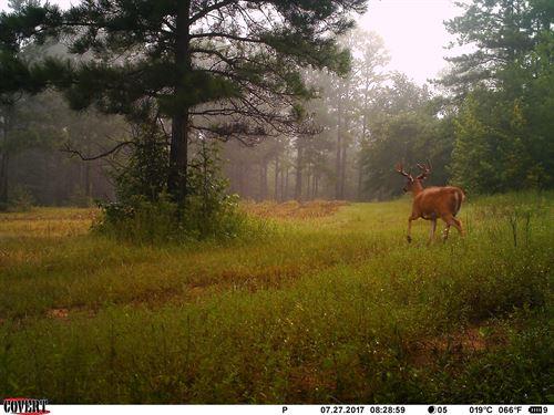 Weedy Hill Plantation : Fort Valley : Crawford County : Georgia
