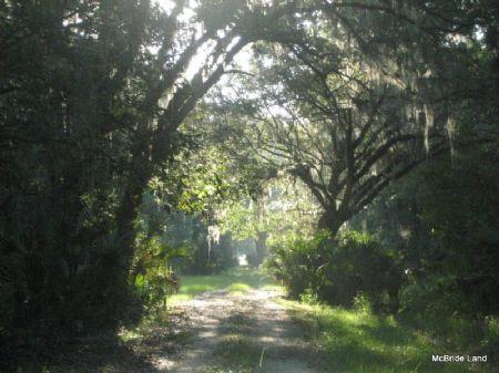 Pine Church Farm - 688 Acres : Citra : Marion County : Florida