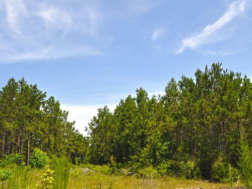 136 Acres Off Cr 250 : Jasper County : Texas