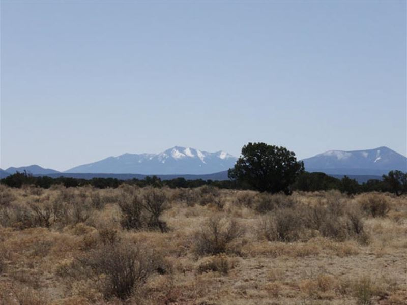 1.08 Acres 1600 Camp, Atv, Hike : Williams : Coconino County : Arizona