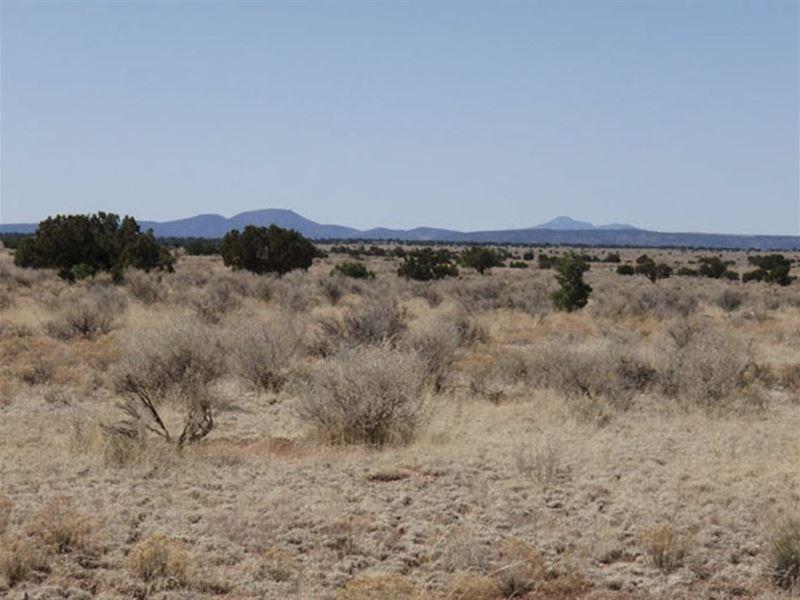 2.16 Acres 2900 Camp, Atv, Hike : Williams : Coconino County : Arizona