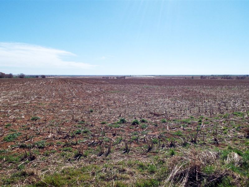 2/10/17 Auction 160 Acres Of Crop : Bison : Garfield County : Oklahoma