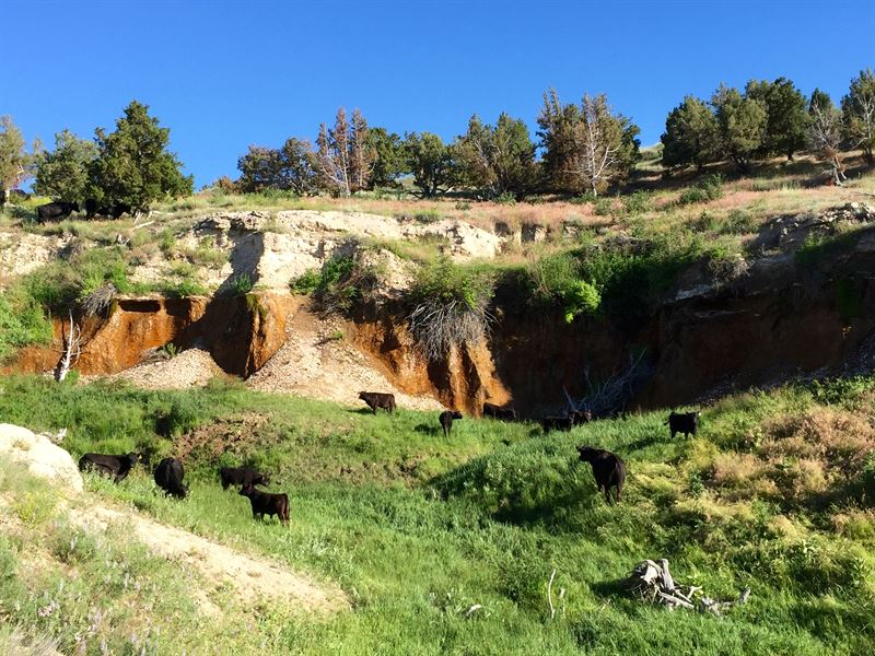 Canyon Springs Ranch : Yoder : Goshen County : Wyoming