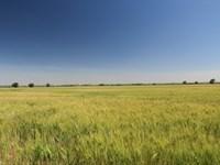 South Platte River Farm : Sutherland : Lincoln County : Nebraska