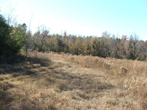 Timber And Hunting Tract On Creek : Elko : Barnwell County : South Carolina