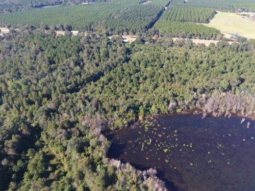 110+/- Acres In Pearl River County : Lumberton : Pearl River County : Mississippi