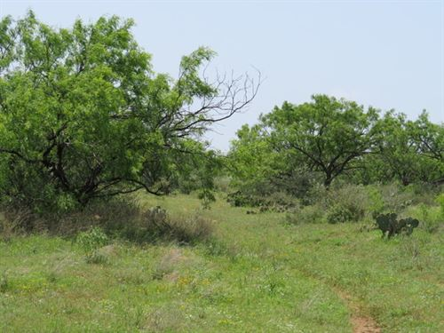 Pecan Springs 48 : Robert Lee : Coke County : Texas