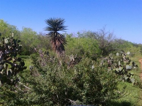 Creek Bend Ranch 1 : San Diego : Duval County : Texas