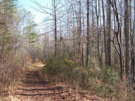 22 Acre Minifarm/Homesite - Lot 14 : Alexander City : Tallapoosa County : Alabama