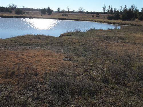 Native Grass With Timber & Pond : Buhler : Reno County : Kansas