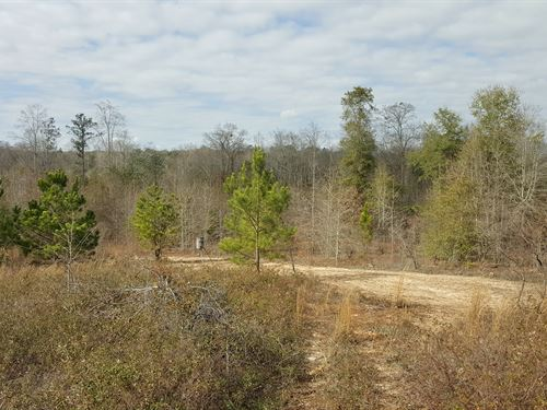 Great Hunting Affordable Price : Preston : Webster County : Georgia