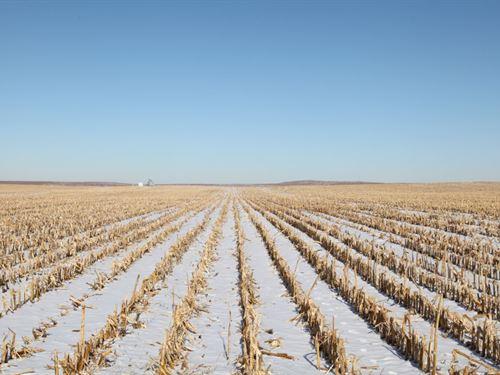 Phillips County Pivot Irrigated : Holyoke : Phillips County : Colorado