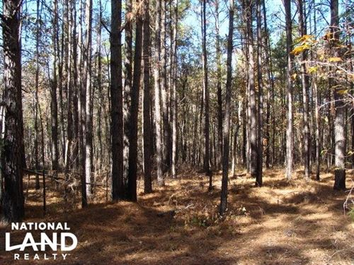 49 Acres Hunting & Timber Land : Jersey : Bradley County : Arkansas