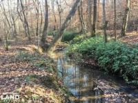 Hardwoods And Creeks Near Tugaloo : Westminster : Oconee County : South Carolina