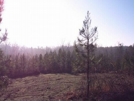 69 Acre Homesite : Alexander City : Tallapoosa County : Alabama