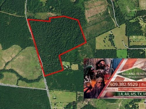 111.3 Ac, Nice Home Site Potential : Buna : Jasper County : Texas