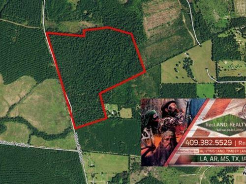 111.3 Ac, Nice Home Site Potential : Buna : Jasper County : Texas
