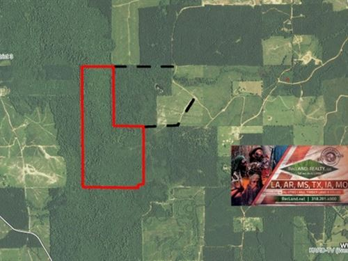 245 Ac - Hunting Along Castor Creek : Columbia : Caldwell Parish : Louisiana