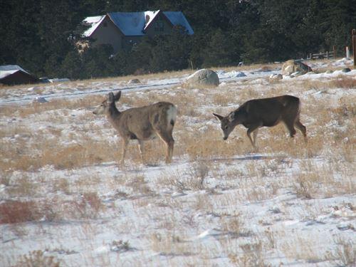 236499 - Abundant Wildlife Viewing : Buena Vista : Chaffee County : Colorado