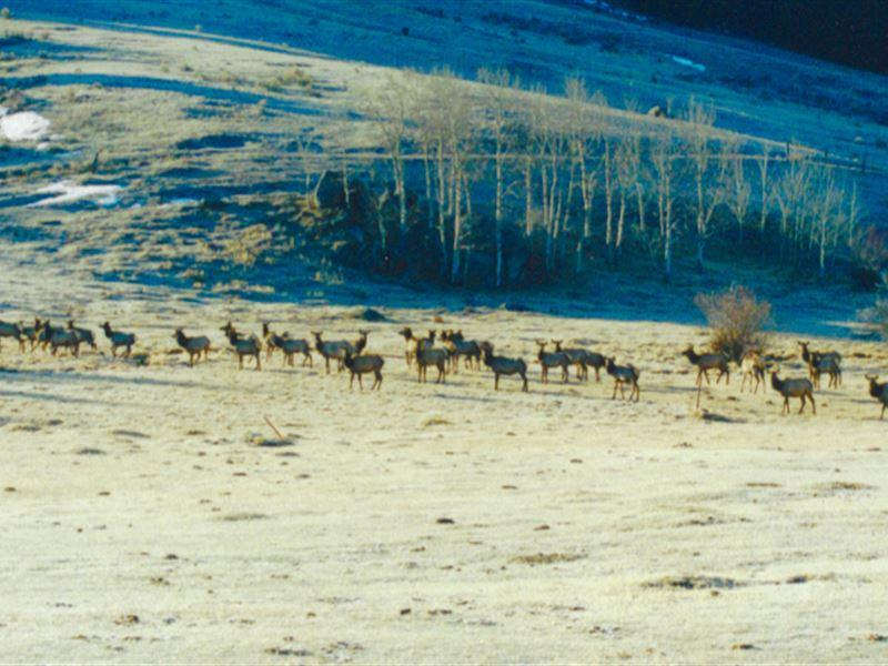 Basin Creek Elk Song Ranch : Butte : Silver Bow County : Montana