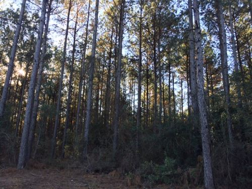 Timber And Hunting Land For Sale Pe : Perkinston : George County : Mississippi