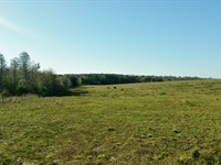 75 Ac For Residential Development : Clermont : Lake County : Florida