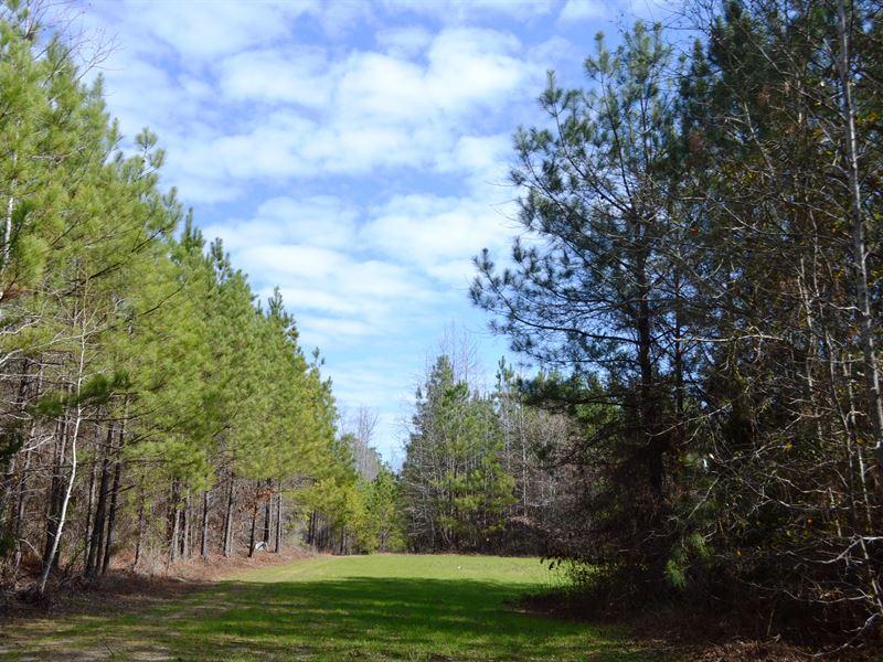 Elmore 206 Hunting And Timber Tract : Weoka : Elmore County : Alabama