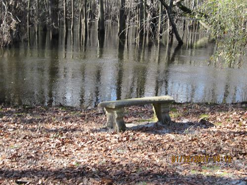 Great Coharie Creek-20 Acre Beauty : Garland : Sampson County : North Carolina