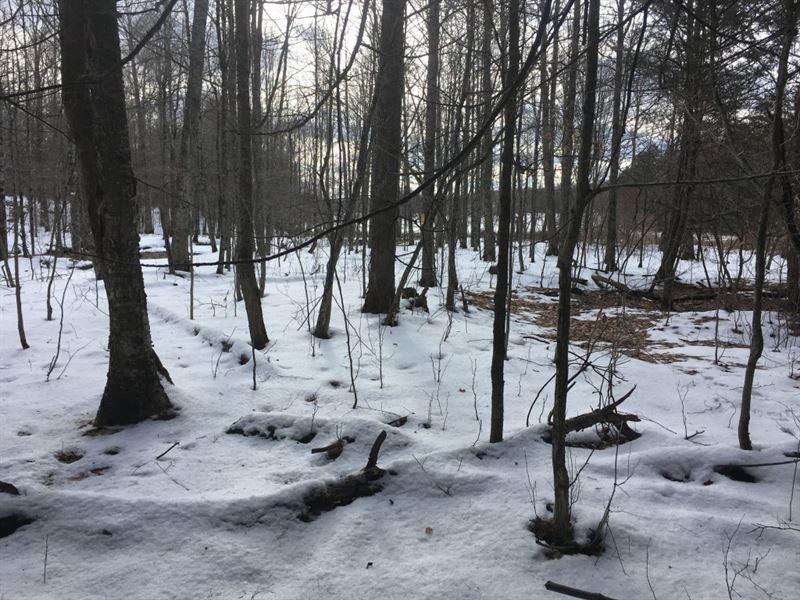56 Acres Timberland In Nanticoke Ny : Nanticoke : Broome County : New York