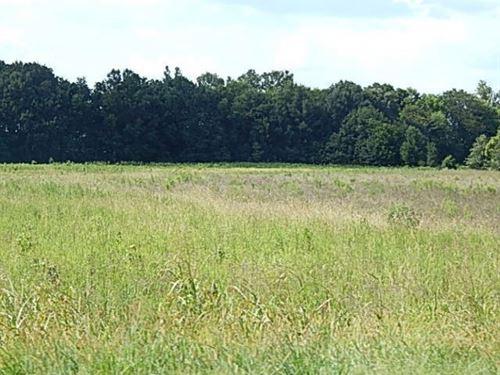 29 Acre Hunting Tract In Yazoo Coun : Yazoo : Mississippi