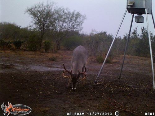 South Texas Hunting : George West : Live Oak County : Texas