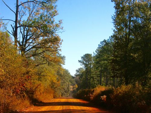 Willacoochee Pines : Bainbridge : Decatur County : Georgia