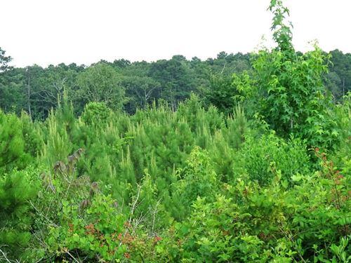 Breland Road- Natural Hardwood : Jena : La Salle Parish : Louisiana
