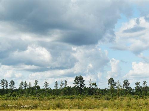 Adams Acres - Rural Retreat : Gillis : Jefferson Davis Parish : Louisiana