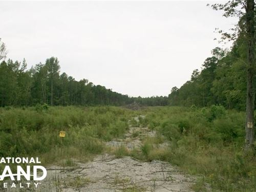 Windsor Hunting And Timber Homesite : Windsor : Bertie County : North Carolina