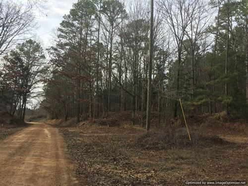 213 Ac Hunting/Timber Investment : Durant : Holmes County : Mississippi