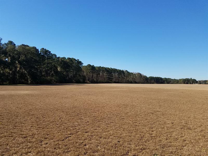 Pristine Irrigated Farm Land : Lakeland : Lanier County : Georgia