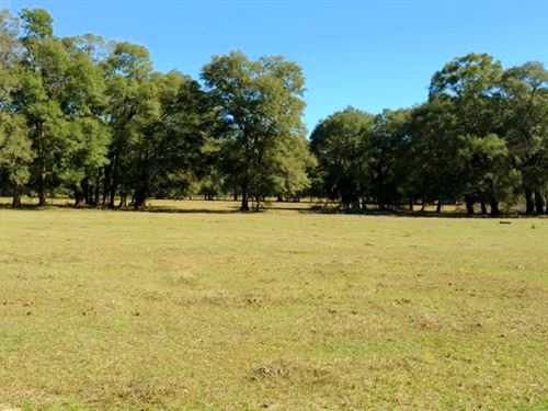 29 Acres In Gorgeous Nw Marion Co. : Reddick : Marion County : Florida