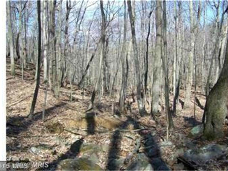 Wooded Lot With 25 Acres : Paw Paw : Hampshire County : West Virginia